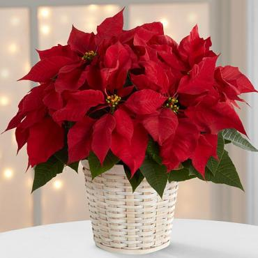 The Red Poinsettia Basket (Sm)