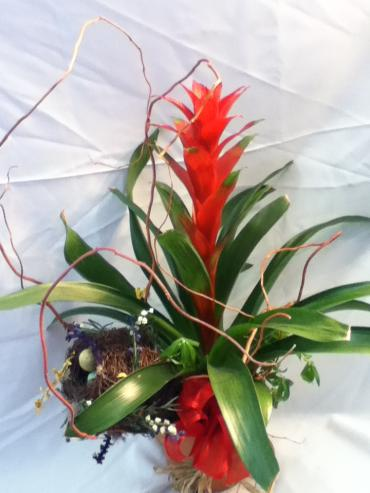 Bromeliad Tower